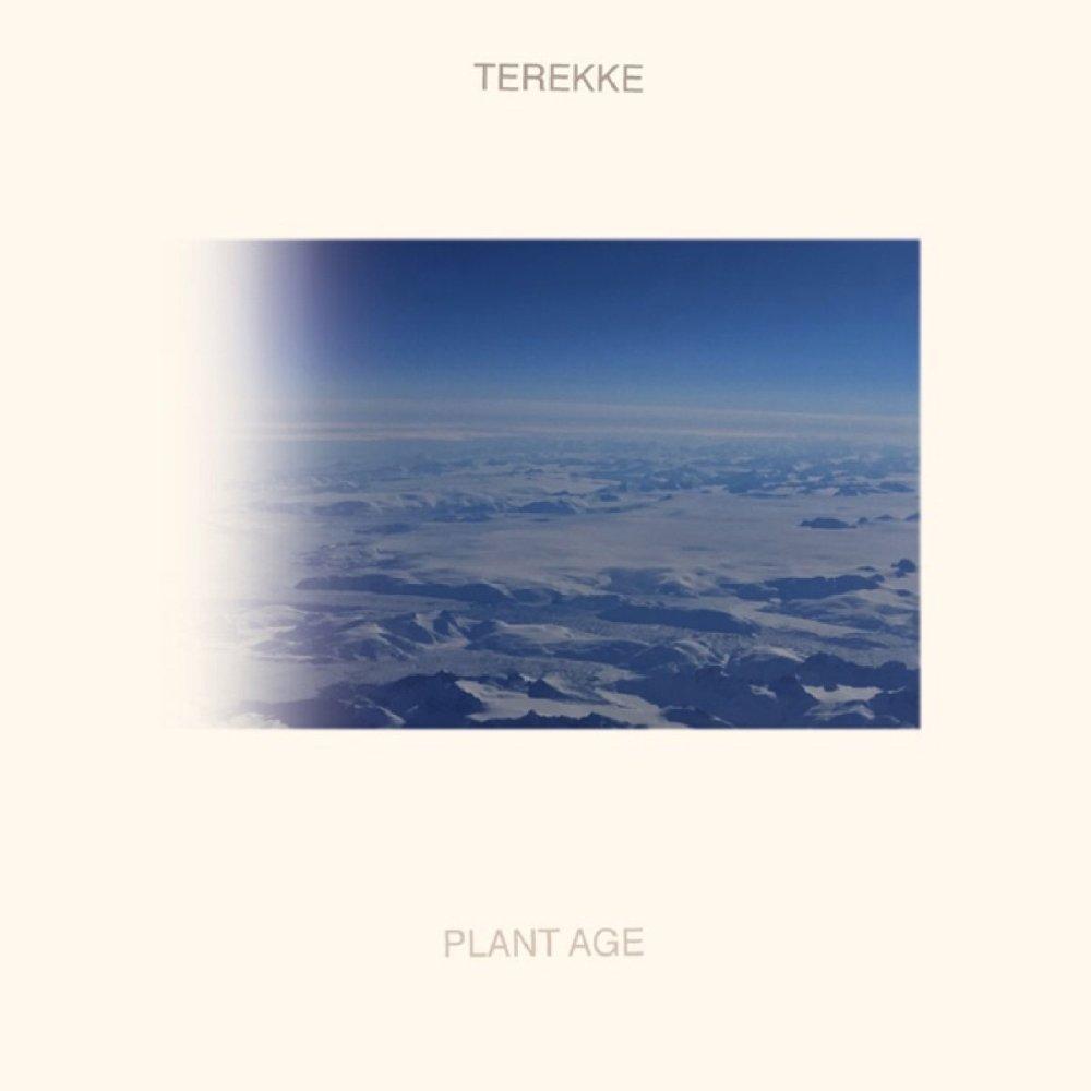 terekke plant age